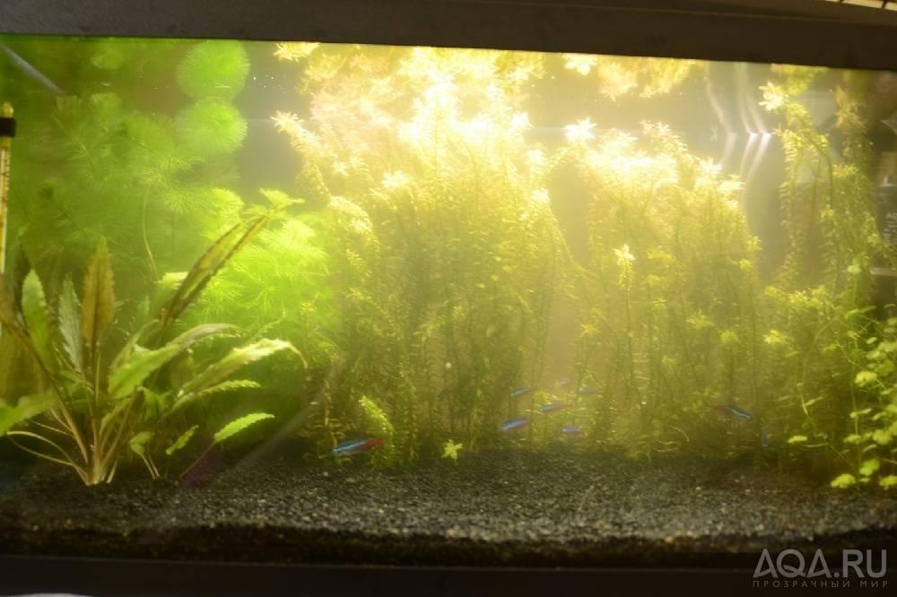 Что делать, если в аквариуме мутная вода