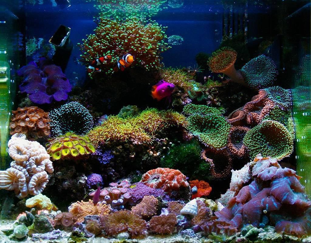 Запуск аквариума в первый раз с нуля ? - правильная пошаговая инструкция для новичков (подготовка, процессы, нюансы)
