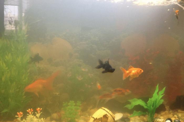 Почему мутнеет вода в аквариуме: причины помутнения и что делать, чтобы от этого избавиться
