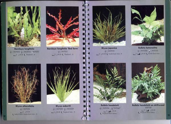 Лучшие аквариумные растения с фото, с названиями и описанием