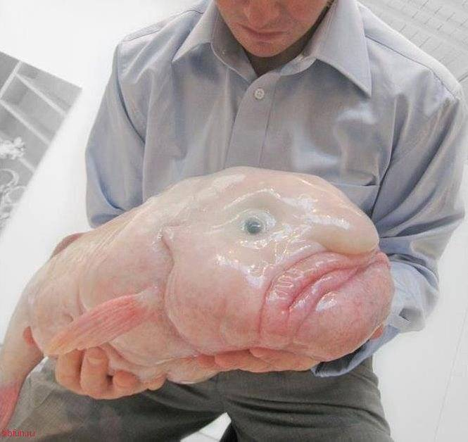 Рыба капля — полная информация, описание и образ жизни