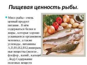 Польза толстолобика: польза, вред и особенности мяса. советы как приготовить вкусно и правильно рыбу (95 фото + видео)