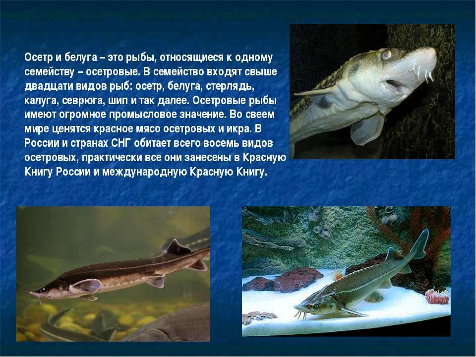 Латимерия - живое ископаемое | atmhunt - вестник охотника и рыбака