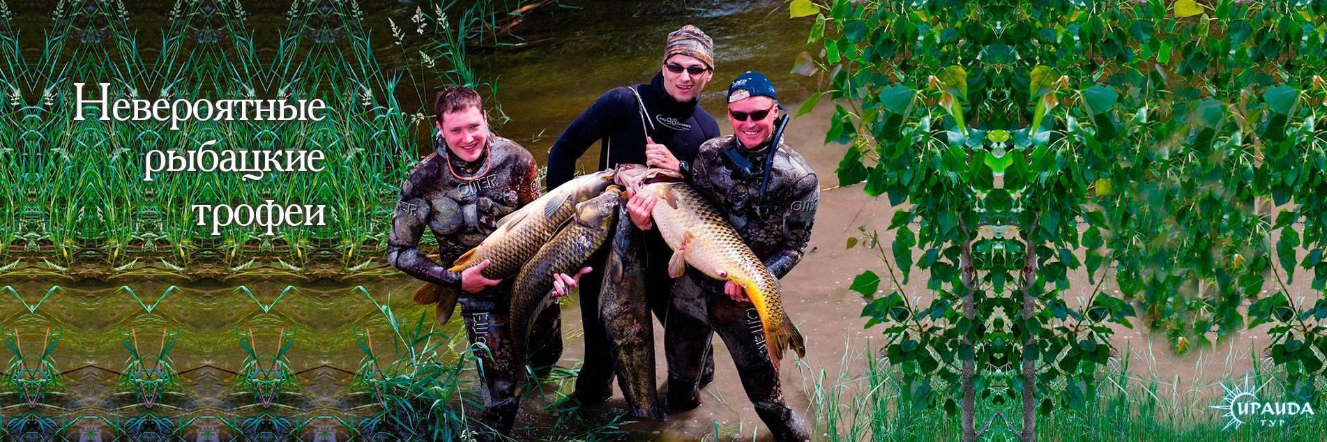 Когда лучше рыбачить в астрахани? | заволжье