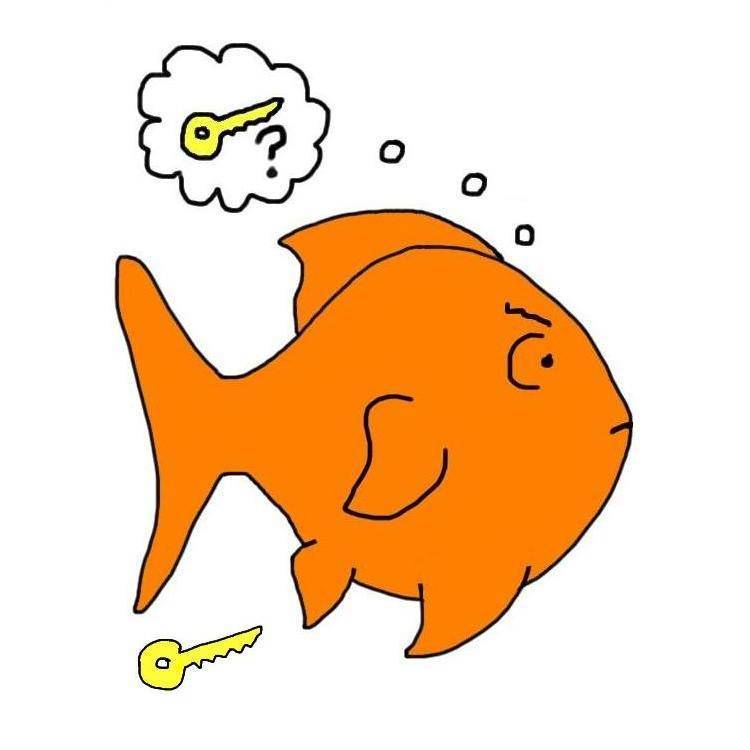 Есть ли память у рыб — мифы и реальность. есть ли память у рыб