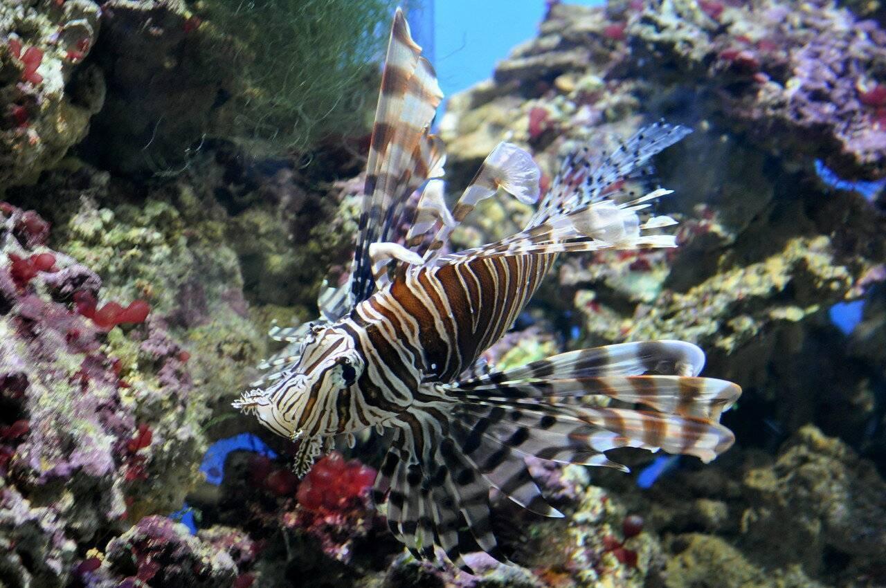 Рыбы красного моря. названия, описания и особенности рыб красного моря « nature-box.ru