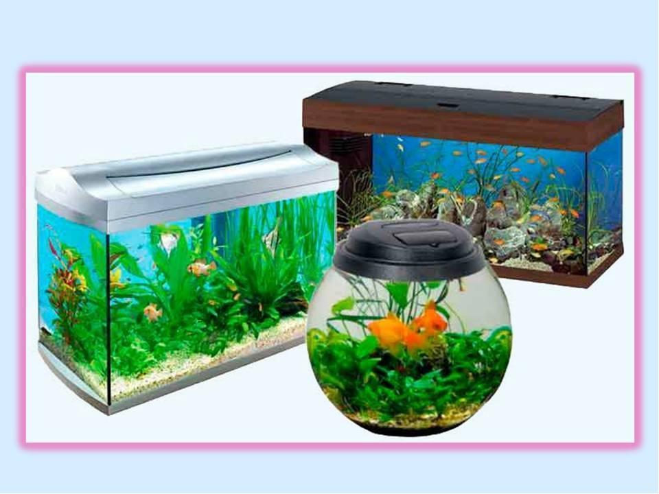 7 лучших фирм- производителей аквариумов