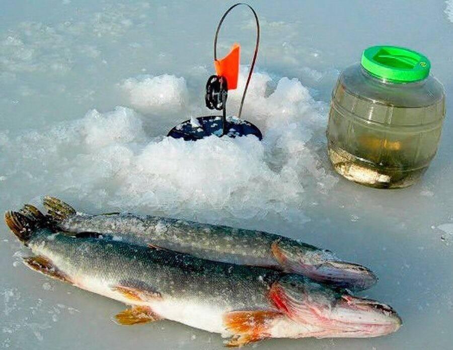 Как ловить щуку по первому льду и на какие снасти как ловить щуку по первому льду и на какие снасти
