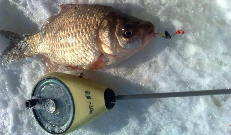 Ловля леща зимой: как правильно ловить со льда крупного крутобокого на зимней рыбалке по первому льду, в глухозимье