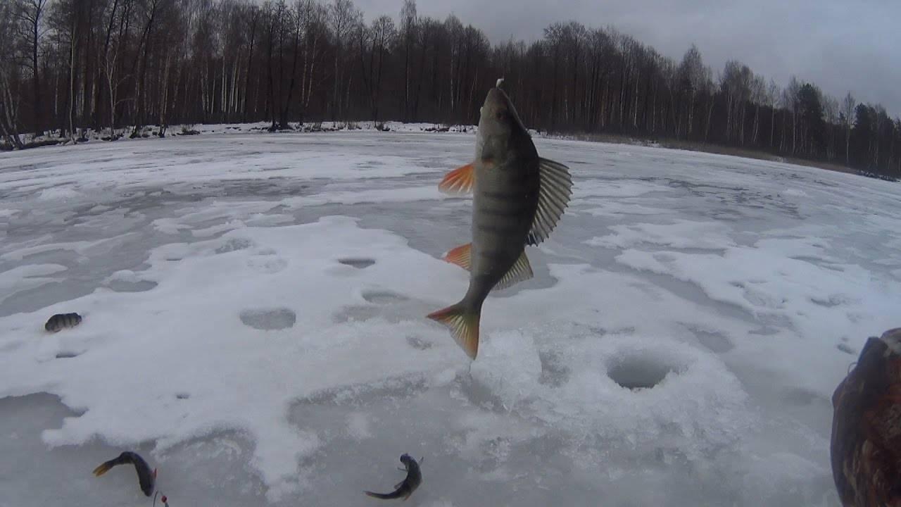 Ловля щуки зимой и активность хищницы в разные периоды
