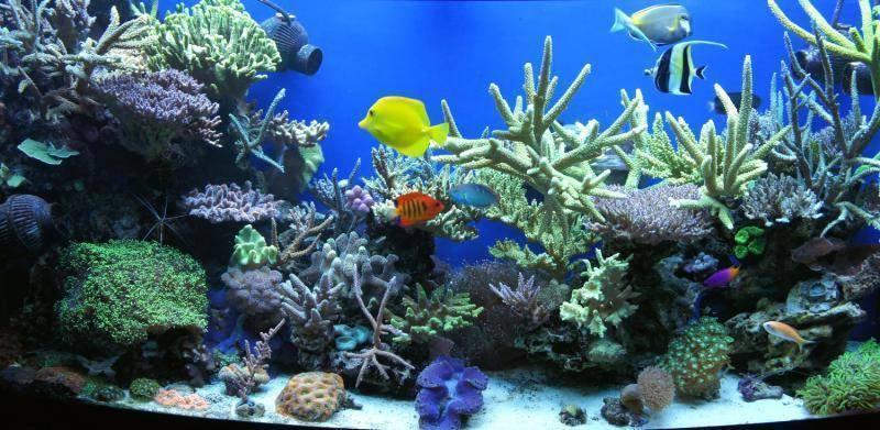 Необходимое оборудование для морского аквариума