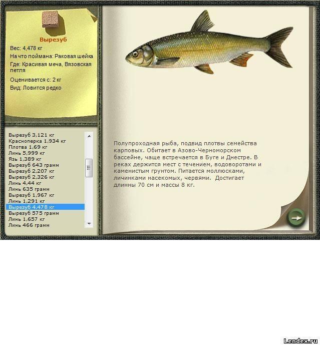 Рыба кутум или вырезуб