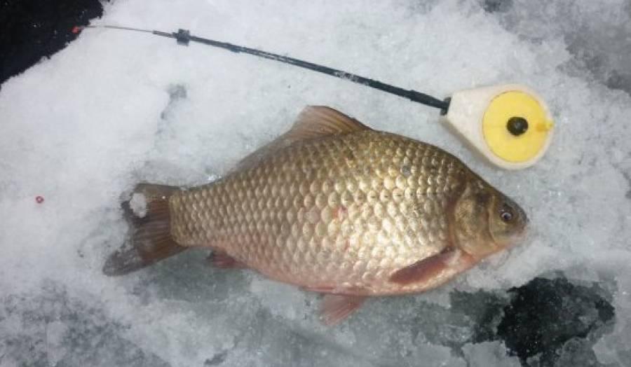 Ловля щуки на жерлицы по первому льду на речке и на стоячем водоеме - в чем разница, как на рыбалку влияет погода, а также иные советы по поимке хищницы