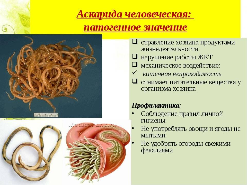 Нематоды у человека: что это такое, симптомы и лечение, фото