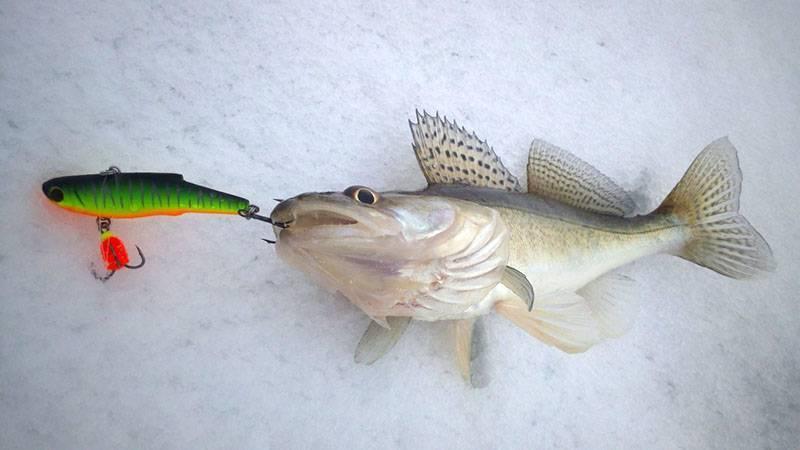 Ловля судака зимой на раттлины: (самые уловистые ратлины вибы)