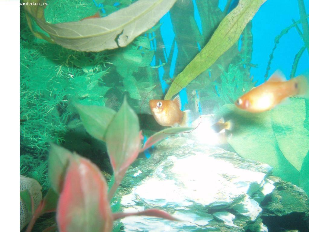 Как спят рыбы в аквариуме? 14 фото спят ли аквариумные рыбки по ночам? особенности сна рыб разных видов
