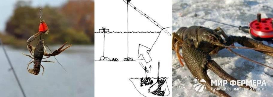 Как ловить раков, где и когда можно ловить. информация о запрете