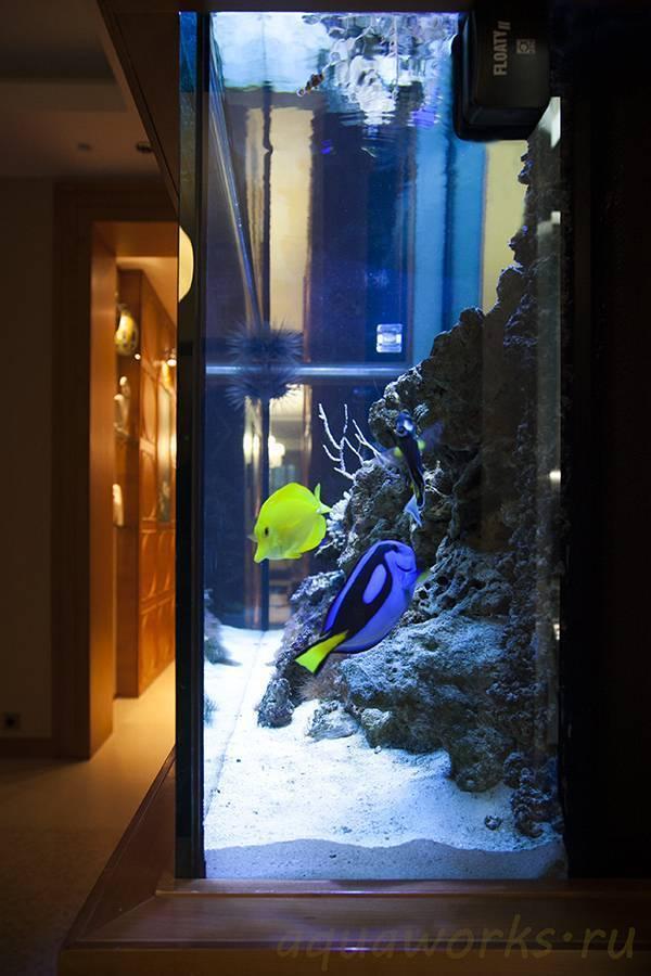 Цихлидник - как правильно запустить,полное руководство | аквариумные рыбки