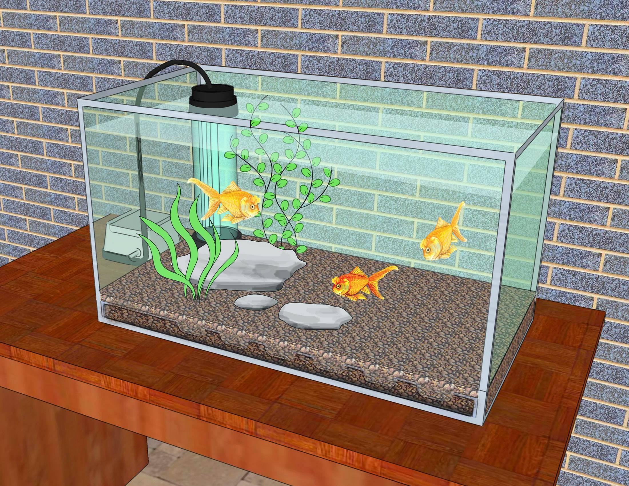 Почему рыбки умирают в аквариуме? аквариум для начинающих