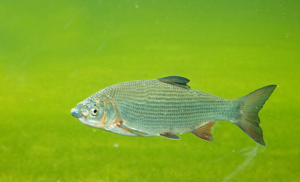 Водоем как среда обитания рыб. любительское рыболовство [с иллюстрациями]