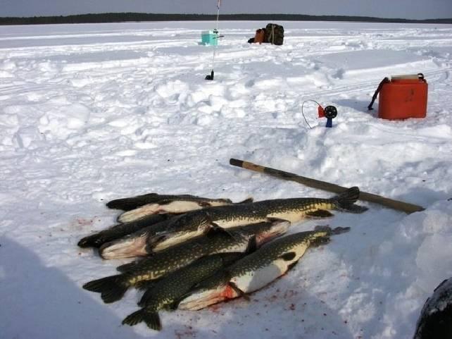 Рыбалка в пермском крае: ловля на реках, озёрах и водохранилищах перми | berlogakarelia.ru