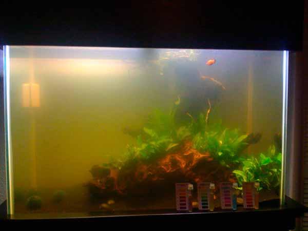 Почему в аквариуме мутнеет вода? 35 фото как можно с этим бороться? как быстро избавиться от проблемы в аквариуме с рыбками и фильтром? как устранить причины помутнения воды?