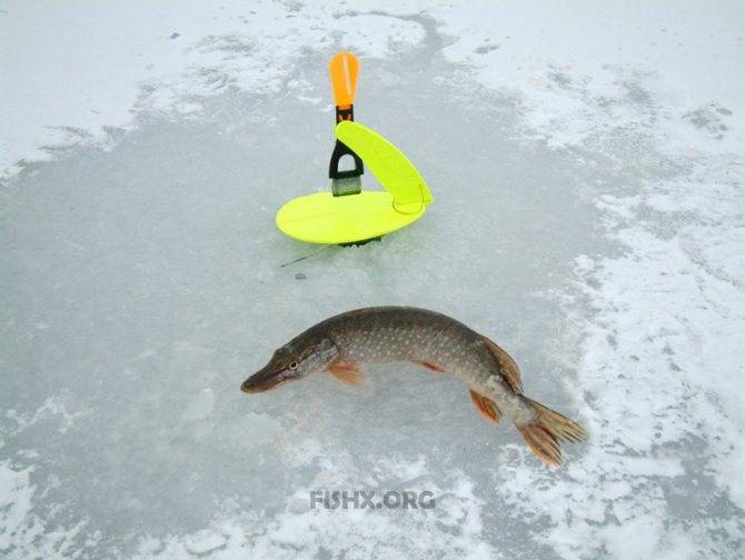 Тактика и техника ловли щуки на жерлицы по первому льду