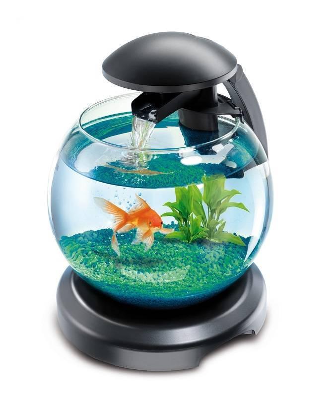 Запуск аквариума с нуля: быстрый запуск нового аквариума