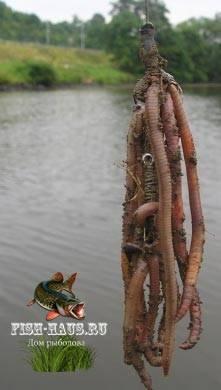 Ловля на червя выползка | ловим все