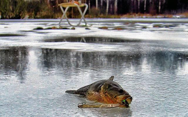 Ловля ротана осенью: места обитания, основные способы ужения