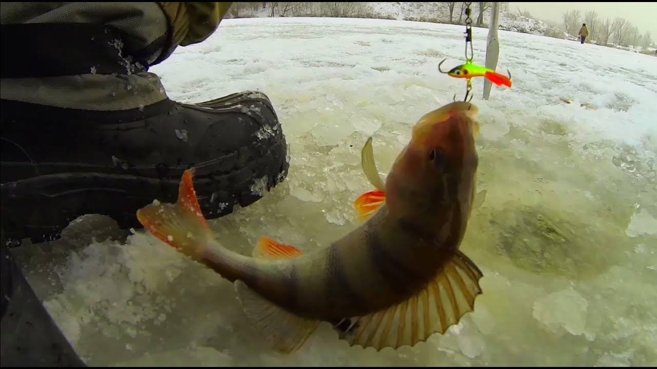 Когда клюет рыба? прогноз клева рыбы своими руками: весна, лето, осень и зима