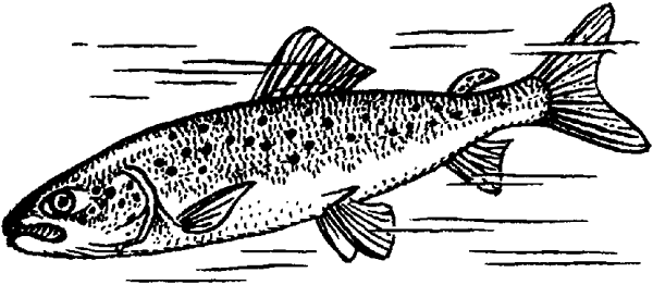 Рыба дальнего востока фото и названия — ловись рыбка