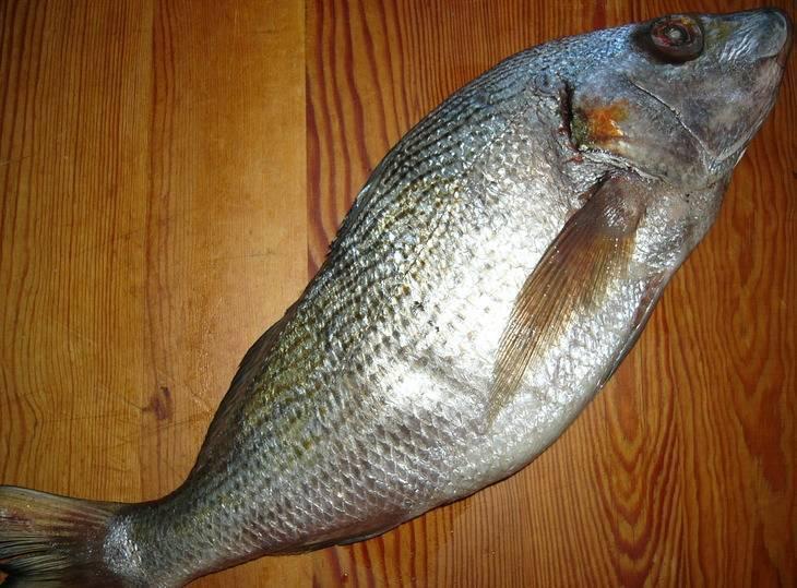 Рыба на дом интернет магазин - про рыбалку