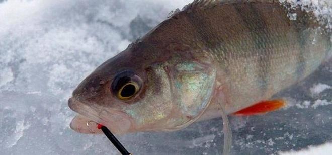 Бокоплав на судака: ловля на бокоплав зимой. блесны бокоплавы для зимней рыбалки — оснастка и техника ловли