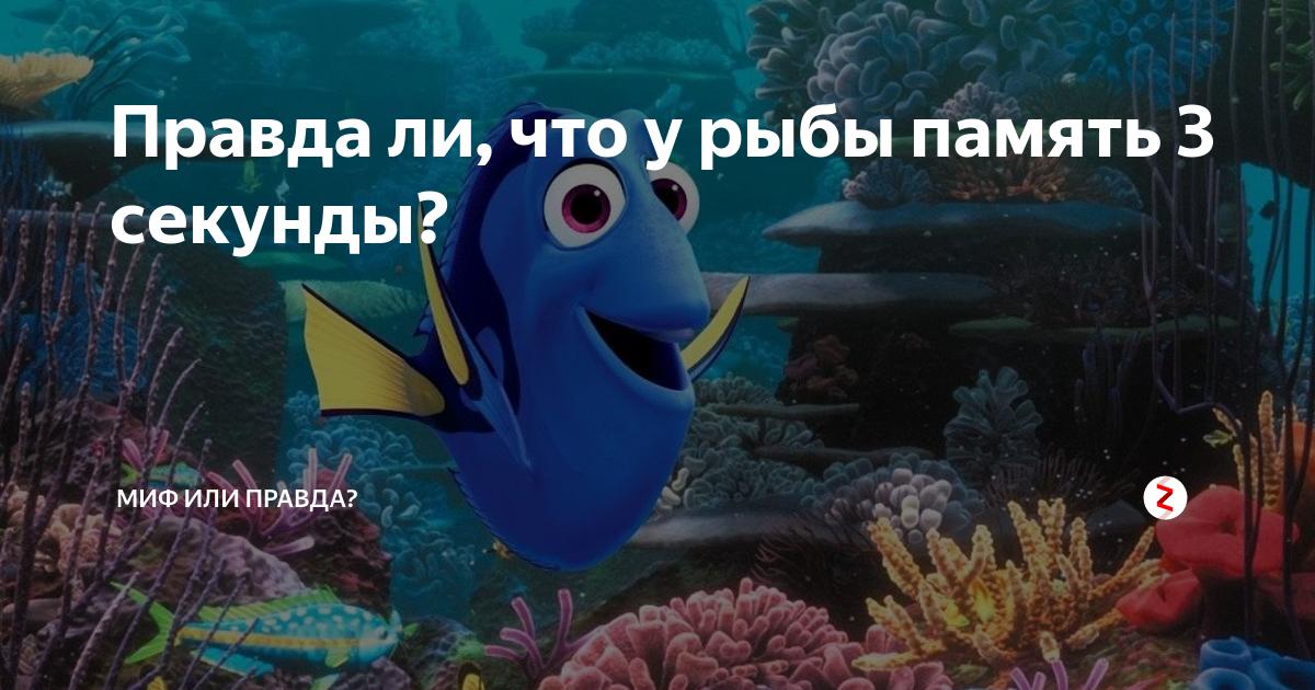 Память как у рыбки: объяснение понятия и какая память у рыб