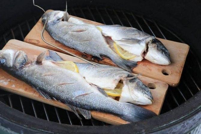 Рыба сибас: что это такое, польза и вред, чилийский сибас