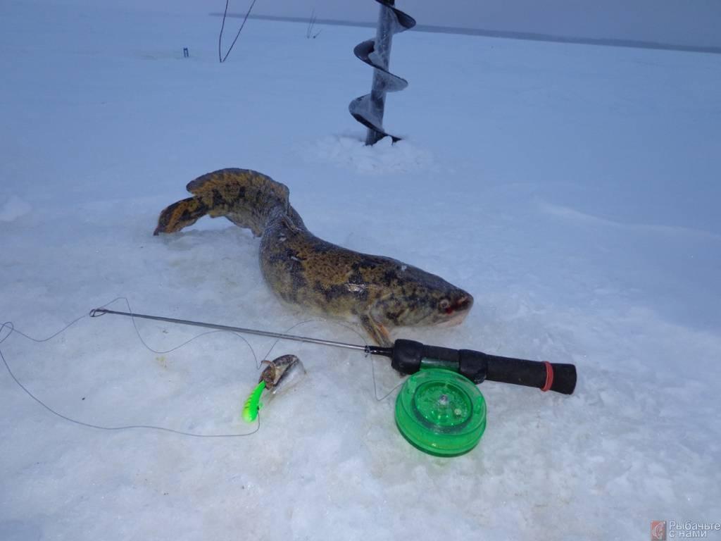 4 способа ловли налима зимой