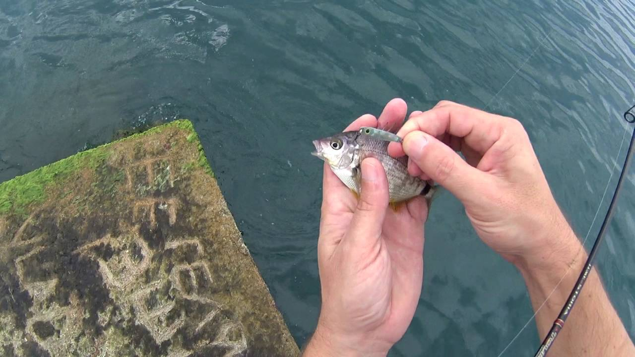 Ачигварское озеро, адлер (сочи). рыбалка, отдых, отзывы, фото, видео, озеро на карте, где находится и как добраться – туристер.ру