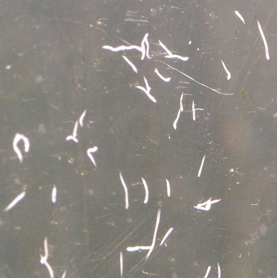 Как избавиться и откуда берутся кожееды в квартире – обзор лучших способов борьбы с насекомым