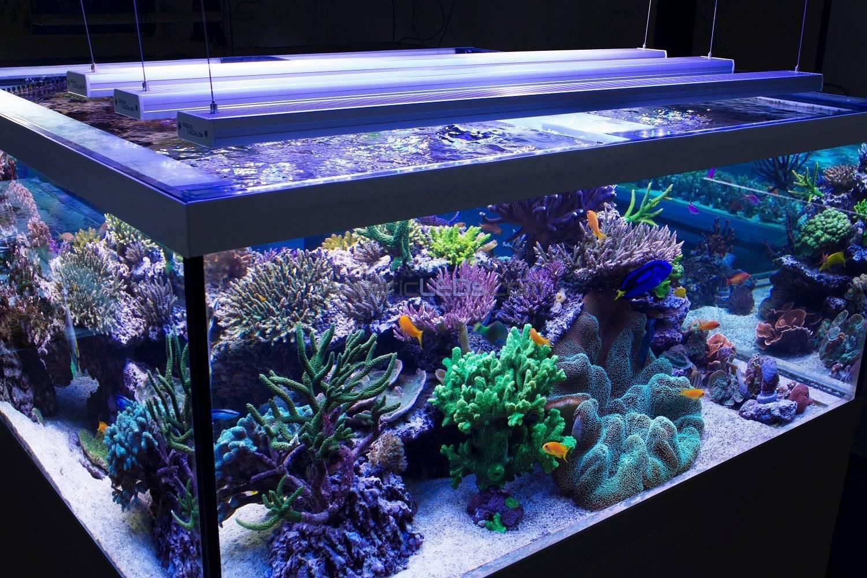 Лампы для аквариума – типы, характеристики, интенсивность, выбор освещения