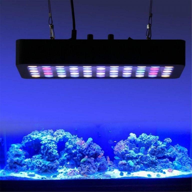 Светодиодная лента для аквариума (19 фото): особенности освещения светодиодной лентой. как выбрать? как установить влагозащитную подсветку?