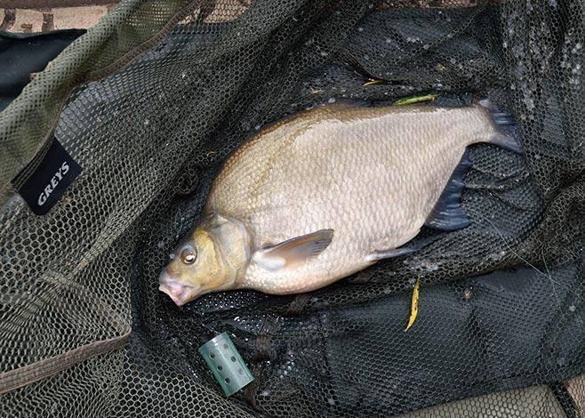 Рыбалка в витебске и витебской области: ловля сома на западной двине и другой рыбы в других местах, секреты рыбалки
