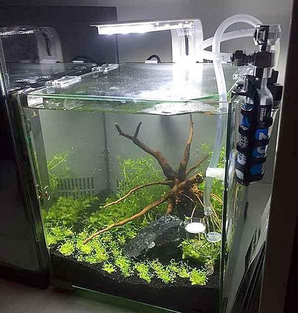 Какая температура воды должна быть в аквариуме для нормального существования рыбок и растений?