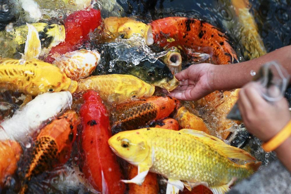 Пруд своими руками для разведения рыбы: как его правильно сделать