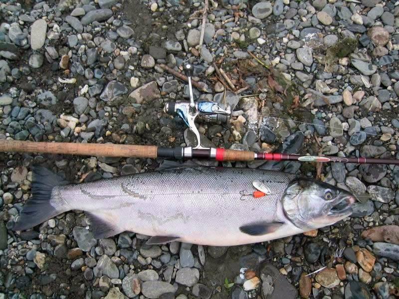 Луфарь — выбор снастей и необходимой оснастки. проводка и тактика ловли рыбы + 140 фото рыбы и мест ее обитания