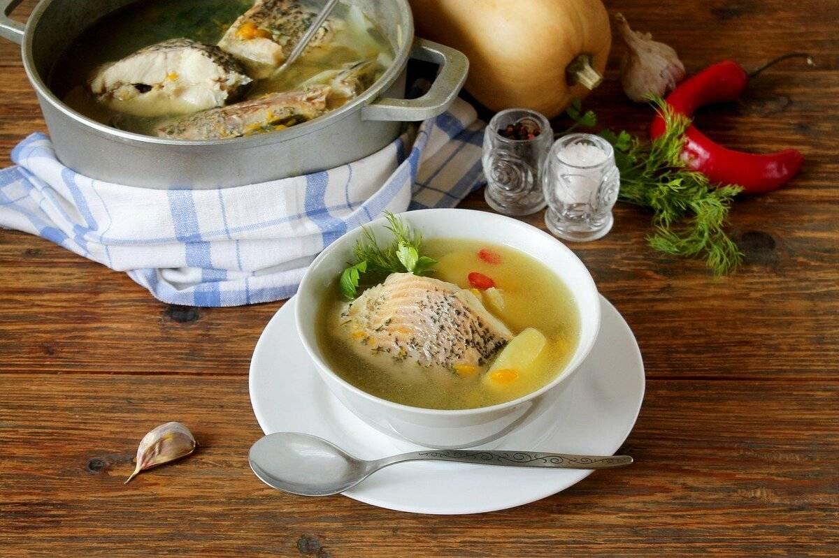 Уха из осетра: рецепты в домашних условиях, способы приготовления супа пошагово | berlogakarelia.ru