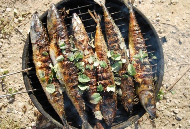 Шашлык из судака: рецепты на мангале, на углях или решетке, правила маринования