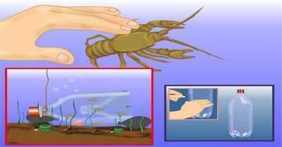 Как сделать раколовку своими руками и на что ловить раков?