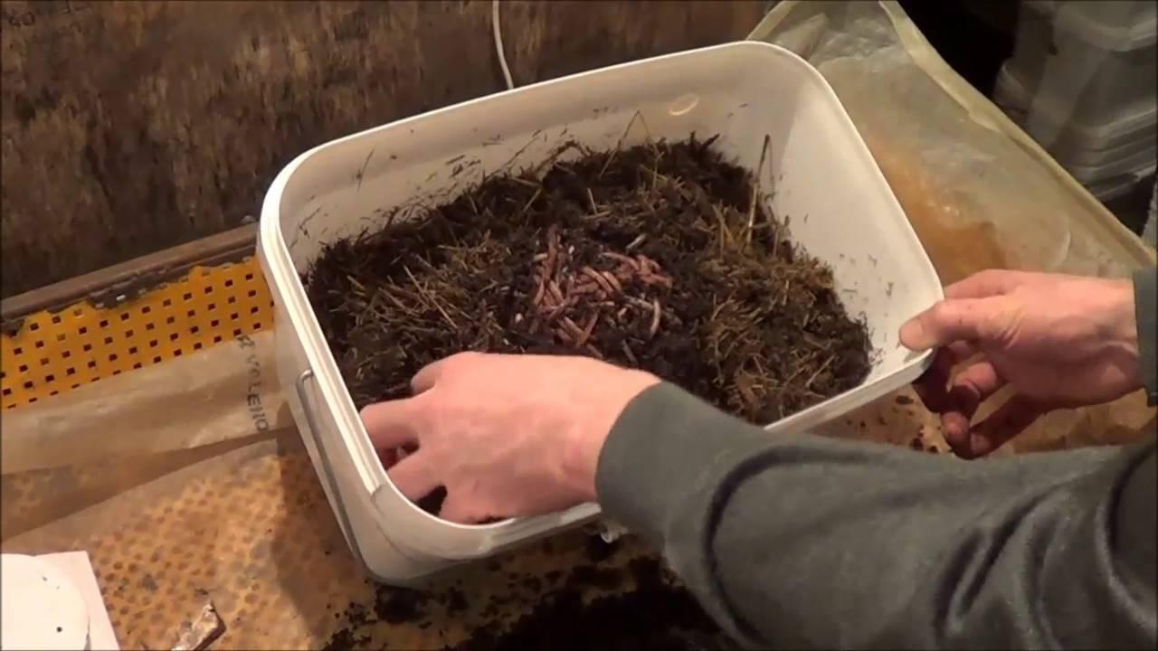 Как разводить червей для рыбалки в домашних условиях