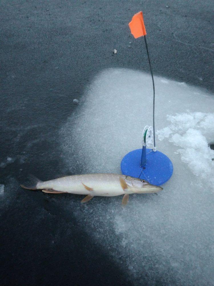 Ловля щуки на жерлицы по первому льду, как сделать оснастку своими руками